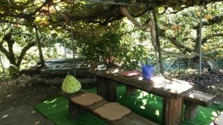 梨小屋の前のレストスペース