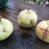 こんな梨くんも、います。