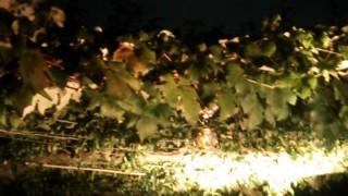 中秋の名月を撮影しました