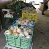 幸水梨の初収穫