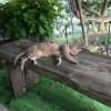 飼い猫のトラちゃんはお気楽です