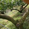 梨の木のスーパーおじいちゃん