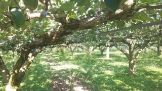 梨の収穫がほぼ終了しました
