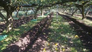 来年の収穫を目指して始めています
