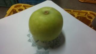 完璧な二十世紀梨5L 500g 梨木が頑張りました。